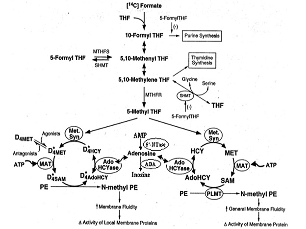 methylation_chart